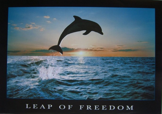 145leapoffreedomdolphin