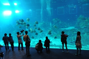 SINGAPORE-ENTERTAINMENT-AQUARIUM