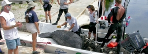 A previous rescue: Photo: Dolphin Research Center, Grassy Key, Florida, www.dolphins.org