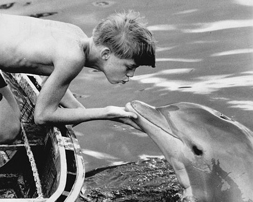 Mitzi the dolphin with co-star Luke Halpin: original 1963 film Wikimedia Commons