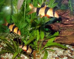 freshwaterfishkeeper.blogspot.com