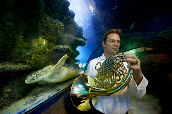 Helping the blind picture sea life with musical textures and shapes