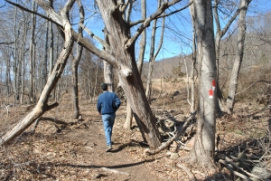Hiker walking past the second of two dead trees standing next to WRRSP Hill Street access trail.