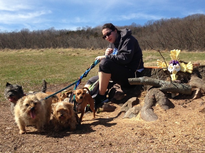 """Albertus Magnus student Miranda Richetelle, 20, and her passel of rescue pups... """"The DEEP needs to understand, this tree was an important part of people's lives."""""""